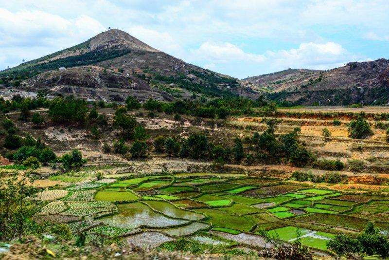 Reisfeldern Madagaskar