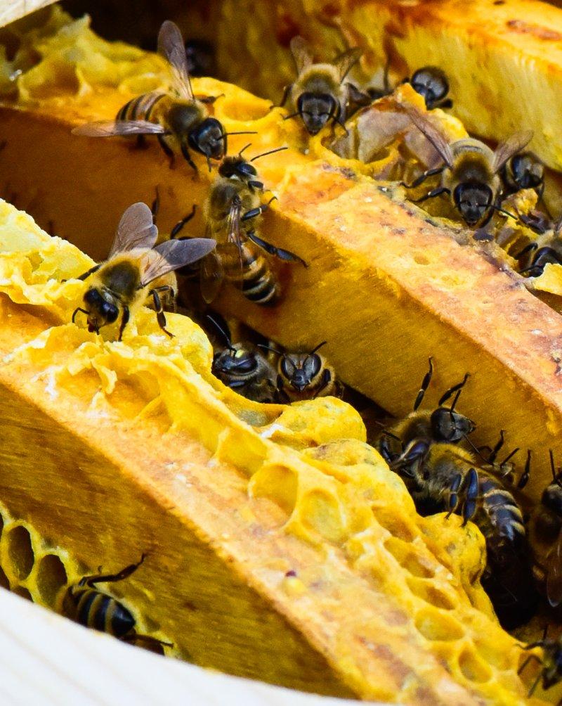 runde Bienenwaben